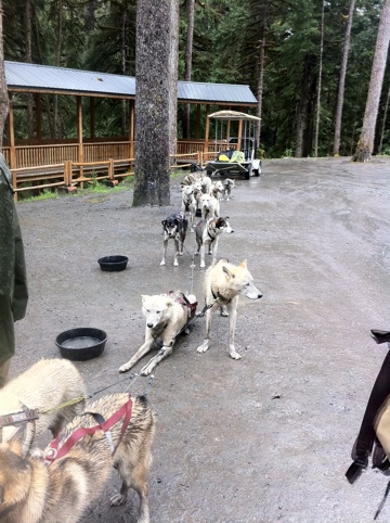 Juneau Sled Dogs